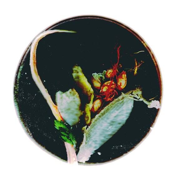 Feuillantine explosive à la fève et émincé de pépins gratinés